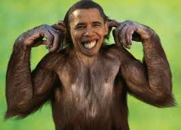 NEVER. obama_monkey11