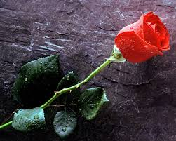 róża?