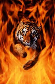 http://tbn0.google.com/images?q=tbn:0eSYLSOSmdnygM:http://imagecache2.allposters.com/images/pic/EUR/2400-1337~Bengal-Tiger-Jumping-Flames-Posters.jpg