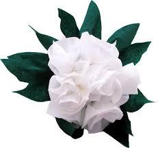 اعرف شخصيتك من الوردة التي roses1.jpg