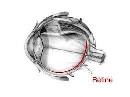 Collection de Vidéos Ophtalmiques dans Ophtalmologie oeilretine