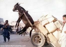 http://tbn0.google.com/images?q=tbn:2AxHeDA_41pNEM:http://topratings.files.wordpress.com/2007/08/donkey-pulling-cart.jpg