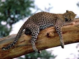 leopard os x
