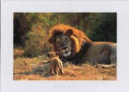 external image father-and-son-lions.jpg