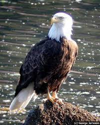 http://www.audubon.org/centennial/species.php