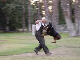 http://mirror-cn-bj1.gallery.hd.org/_c/natural-science/_more2002/_more09/Rottweiler-doing-protection-training-athelete-in-motion-CF.jpg.html