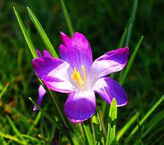 [Imagen: violeta-cuento.jpg]