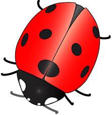 external image ladybug2.jpg