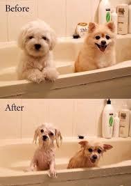 Dog Hair Shedding
