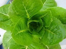 zelenina