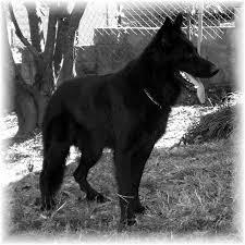 اكبرمجمع لصور الكلاب 11-24-05Valdezz2B_WEdgeSM