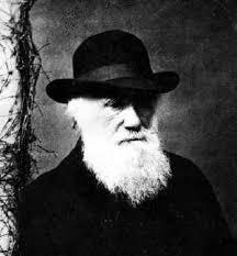 Director Darwin