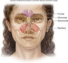 para nasal sinuses
