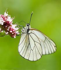 st_butterfly_conservation.jpg