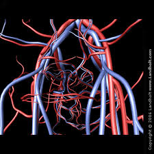 http://www.landholt.com/3d/arteries_and_veins/