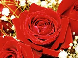 حمراء جميلة ..... Imgp0161.jpg