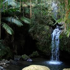 external image rainforest_el_yunque.jpg