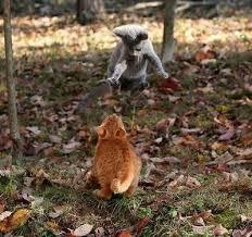 external image funny-cats-a1.jpg