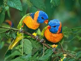 Nos oiseaux exotiques