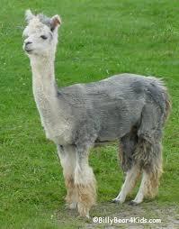 external image llama2.jpg