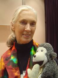 Jane Goodall, patron saint of chimpanzees, makes plea for her primates in ... - jane-goodall