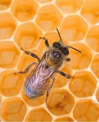 Palo Cedro Honey Bee Festival