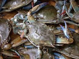 Maryland Blue Crab Cakes
