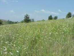 external image prairie.jpg
