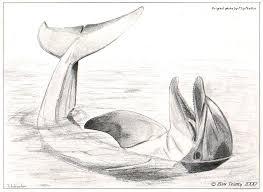 Dolphin Sketches pictures 4