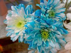 اعرف شخصيتك من الوردة التي 2395130177_af6f11dc81_m.jpg