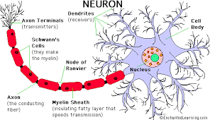 http://www.enchantedlearning.com/subjects/anatomy/brain/Neuron.shtml