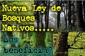 Ley Nª 20.283 de Bosque Nativo