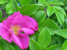 انواع گل