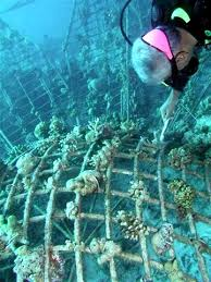 Are artificial reefs good for the environment? 2