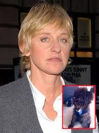 photo | Ellen DeGeneres - ellen_degeneres300