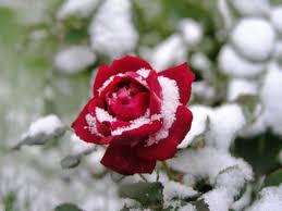 В следующую субботу, в Хабаровске, столбик термометра опустится до -13, возможен снег