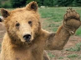 high 5 bear