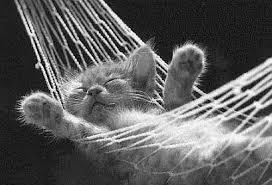 sleeping_cat_resize.jpg