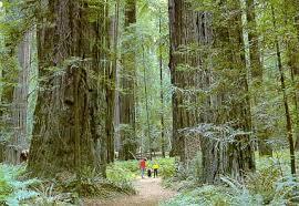 http://sunnyfortuna.com/explore/redwoods.htm