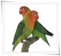 تابع .. صور جميله للطيور kind49ei3.jpg