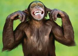 http://www.lovesanimals.com/animal_humor_monkey.htm