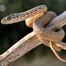 http://tbn0.google.com/images?q=tbn:KnpgUBlRrOv-kM:http://www.lapastora.net/web/media/img_flora_y_fauna_03.jpg