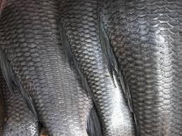 ماهی سالمترین غذاست ولی اگر ماهی سالم مصرف کنید