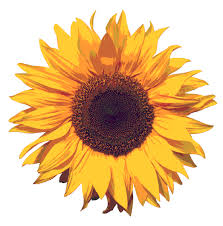 http://www.web-enz.co.nz/sunflower.htm