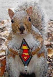 super_squirrel.jpg