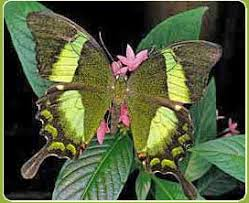 papillons-ex