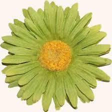 http://images.google.com/imgres?imgurl=http://www.accentscrapbooking.ca/images/green-flower.jpg&imgrefurl=http://www.accentscrapbooking.ca/accueil_en.php&h=302&w=300&sz=24&hl=en&start=6&tbnid=MuyDkAYq_UxLGM:&tbnh=116&tbnw=115&prev=/images?q=green+flower&gbv=2&hl=en&ie=UTF-8