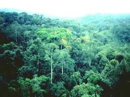 external image rainforest_Congo_FAO.jpg