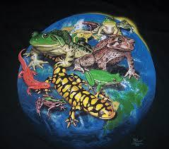 amphibians.jpg