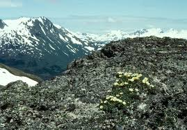 http://tbn0.google.com/images?q=tbn:PBYBRUZieBgCKM:http://www.cas.vanderbilt.edu/bioimages/biohires/ecoregions/h51117tundra3302.jpg